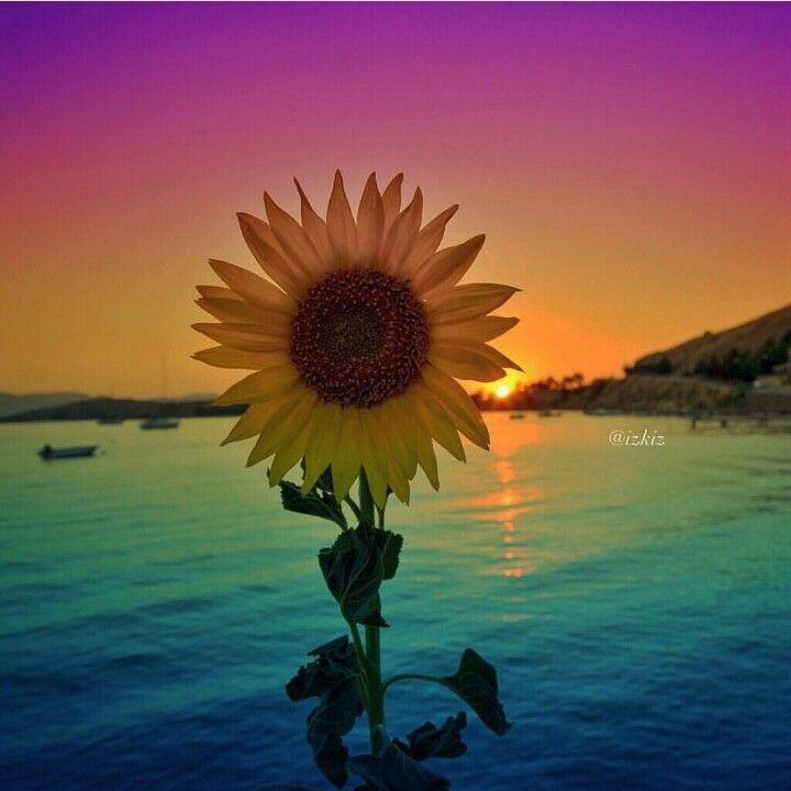 Sunflower for DeMarla's post